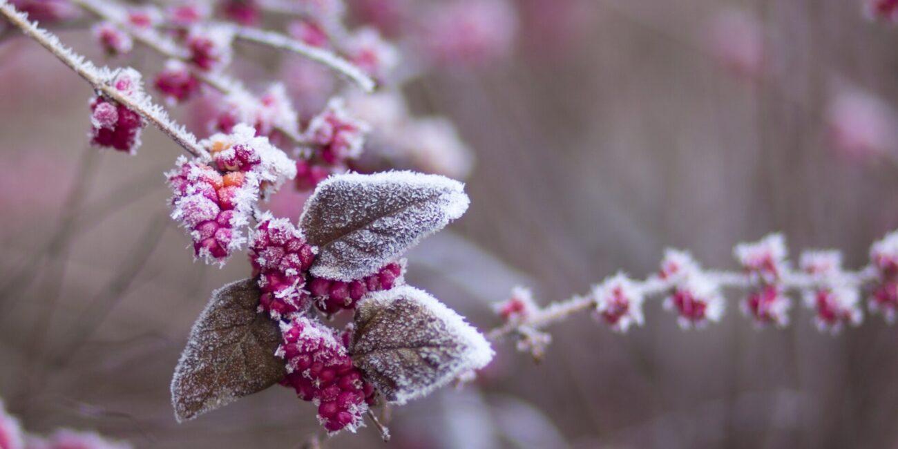 Vinterbær